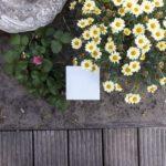 DreamLED Battery Garden & Home Motion Light
