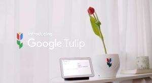 Google Tulip